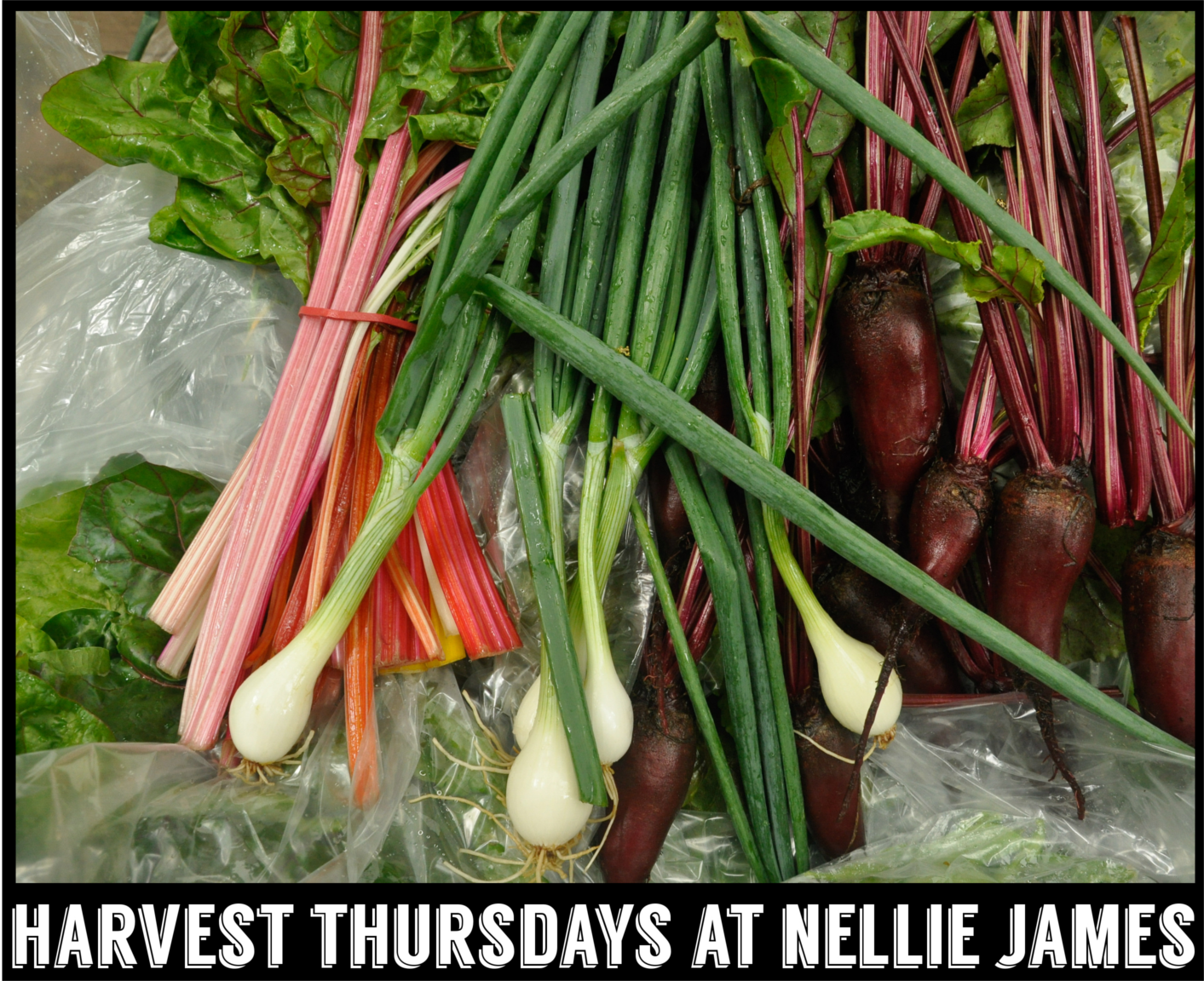 Harvest Thursdays at Nellie James